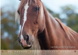 HorseSpirit_12