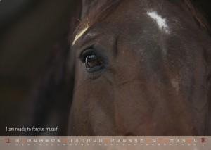HorseSpirit_13