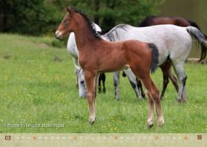 HorseSpirit_4