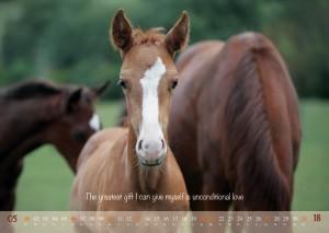 HorseSpirit_6