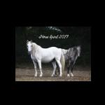 horsespirit17